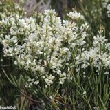 Flora 046