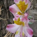 Flora 049