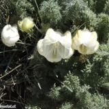 Flora 051