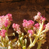 Flora 052