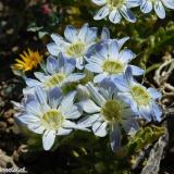 Flora 056