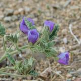 Flora 060