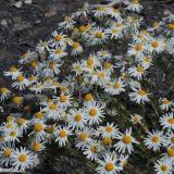 Flora 063