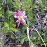 Flora 068