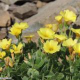 Flora 069