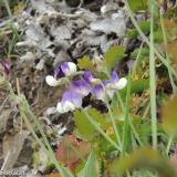 Flora 075