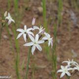 Flora 076