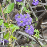Flora 077