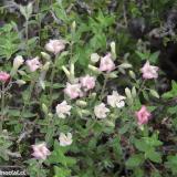 Flora 078