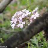 Flora 080