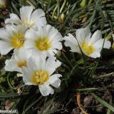 Flora 086