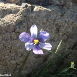 Flora 088