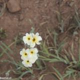 Flora 090