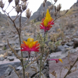 Flora 091