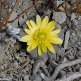 Flora 093