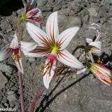 Flora 101