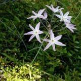 Flora 103