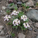 Flora 105