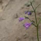 Flora 106