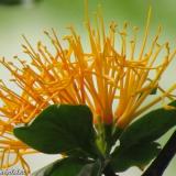 Flora 116