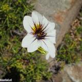 Flora 123