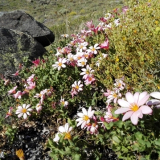 Flora 125