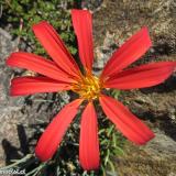 Flora 126