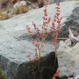 Flora 127