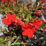 Flora 132