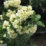 Flora 134