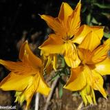 Flora 137