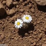 Flora 138