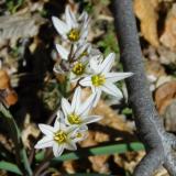 Flora 139