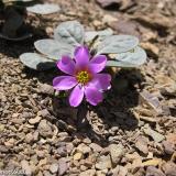 Flora 144