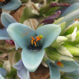 Flora 151