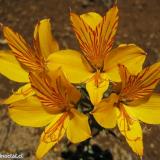 Flora 152