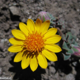 Flora 155
