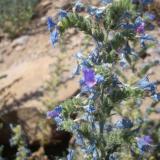 Flora 157