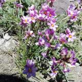 Flora 163