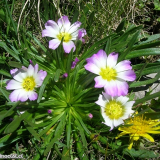 Flora 167