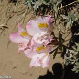Flora 170
