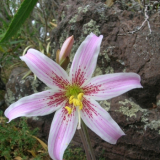 Flora 175