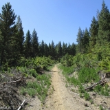 05 Desvio por el Bosque de Pinos