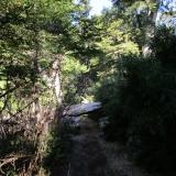 03 Sendero en el Bosque
