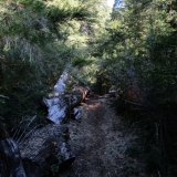 04 Sendero en el Bosque