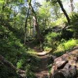 05 Sendero en el Bosque